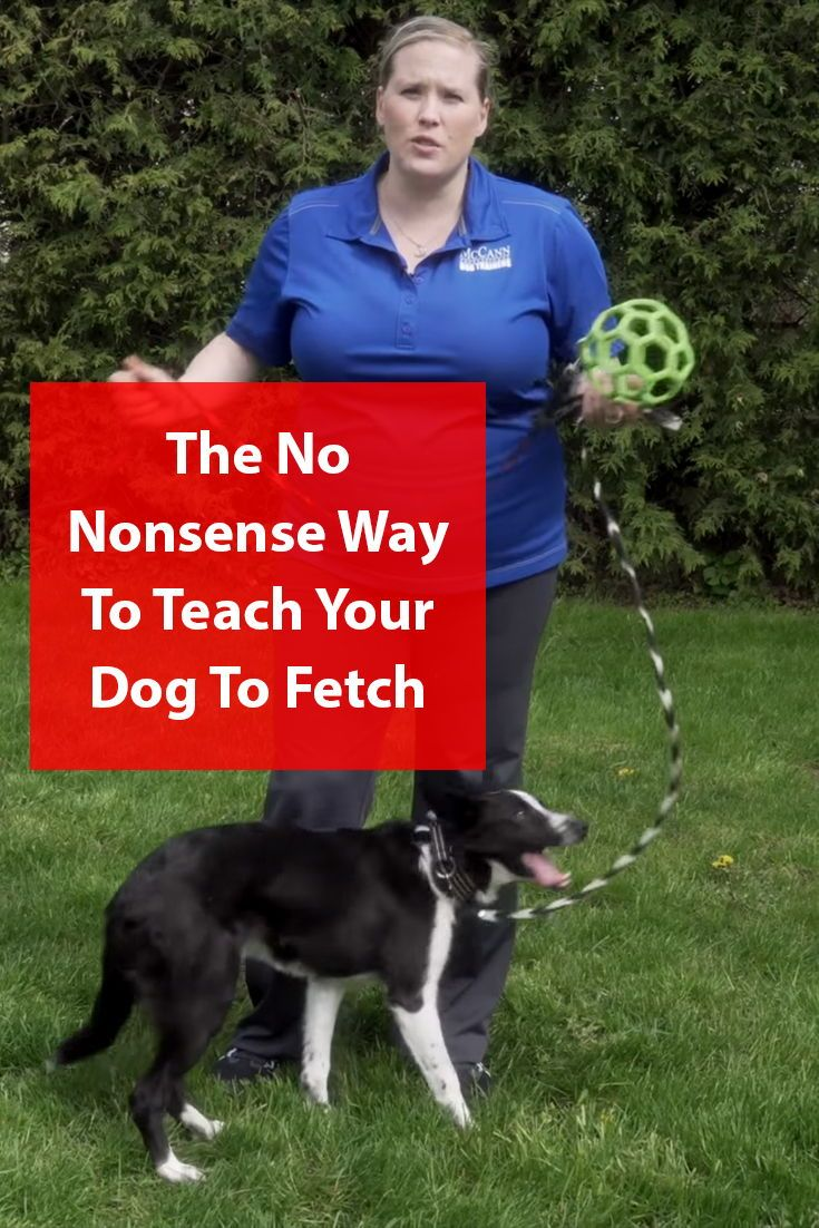 The Secrets Of Teaching Your Dog To Fetch Step By Step