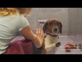 Adopt Azalea On Adoption Dog Pounds Jack Russell Terrier Mix