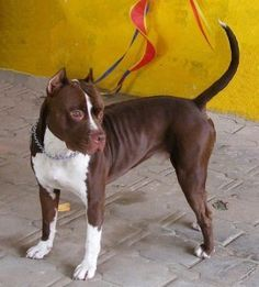 A pit bull was found hanging dead from a tree after she was brutally raped. Demand that authorities use all means to capture this person(s) and once caught, pursue the maximum possible sentence.
