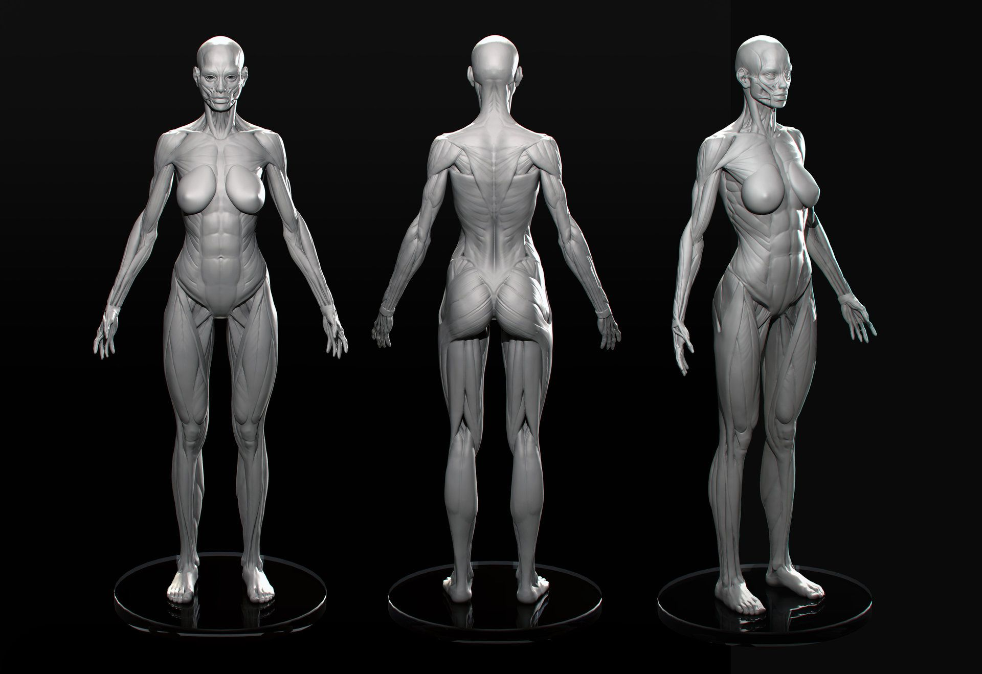 Artstation Female Anatomy Marc Brunet 3d Pinterest Anatomy