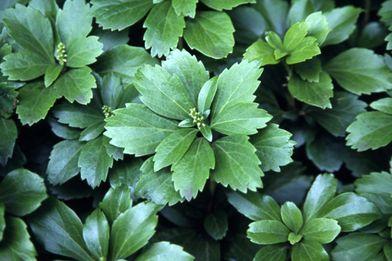 Photo of 日陰で育てられるおすすめの植物 34種類! – みんなの趣味の園芸 NHK出版