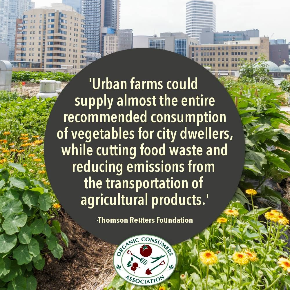 e3c805b7010248254570372069ce7d13 - What Is The Importance Of Urban Gardening