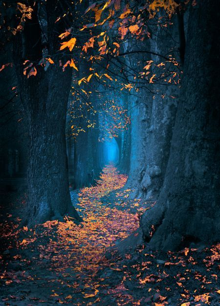 Pathway Photo By Mevludin Sejmenovic National Geographic Your Shot Fantasy Landscape Nature Photography Beautiful Landscapes
