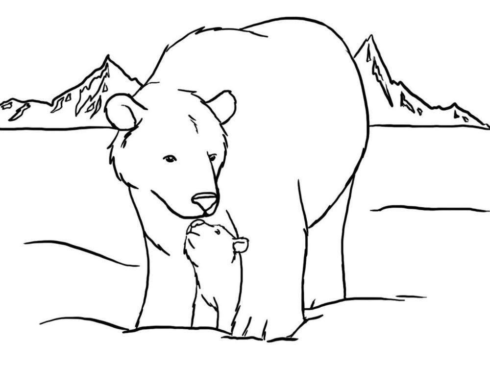 Oso Polar Para Colorear Con Imagenes Oso Polar Oso Polar