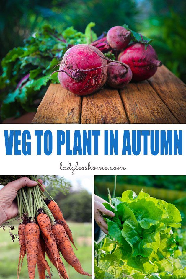Photo of 25 Vegetables to Plant in Autumn