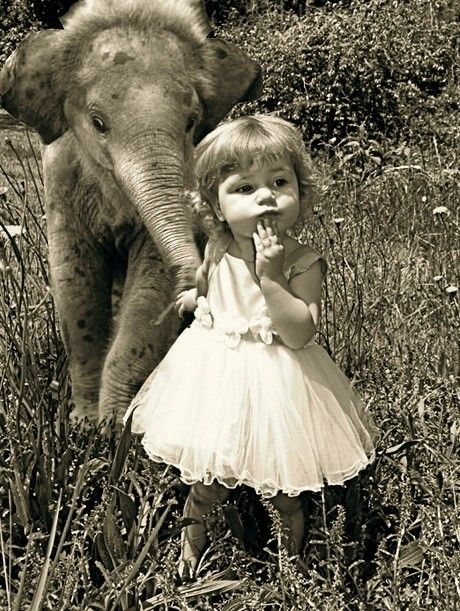 little elephant and little girl