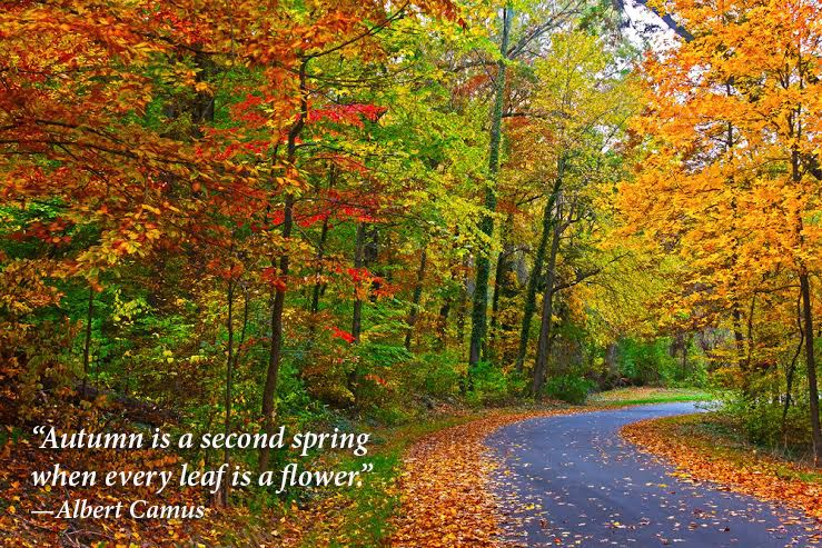 8 quotes that perfectly capture why fall is our favourite