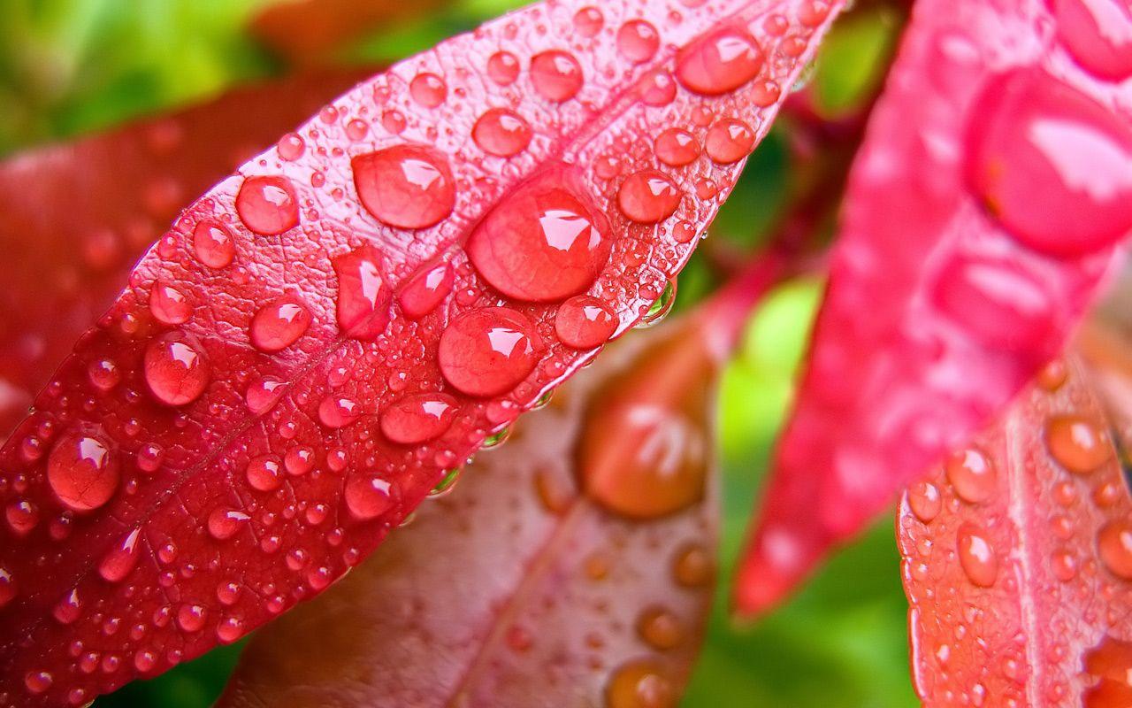 Pin By Warren Osborn On Morning Dew Rain Wallpapers Water Drop On Leaf Water Drops