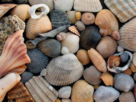 Shells On Edisto Beach State Park South Carolina Usa Photographic Print By Scott T Smith At Allposters