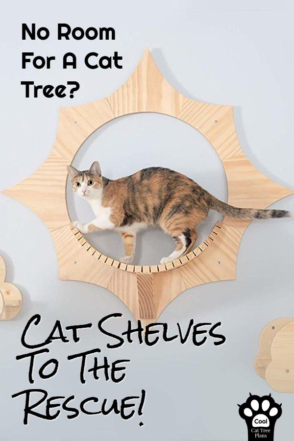 The Ultimate Guide To Cat Shelves Cat Tree Plans Cat Shelves