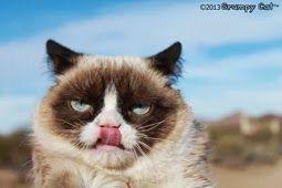 #GrumpyCat #Photos For more Grumpy Cat stuff, gifts, and meme visit www.pinterest.com/erikakaisersot