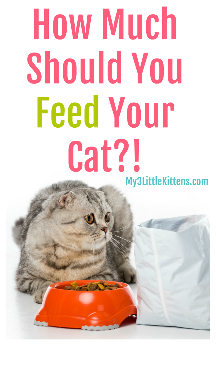 How Much Should You Feed Your Cat My 3 Little Kittens Cat Care Kitten Care Cat Training
