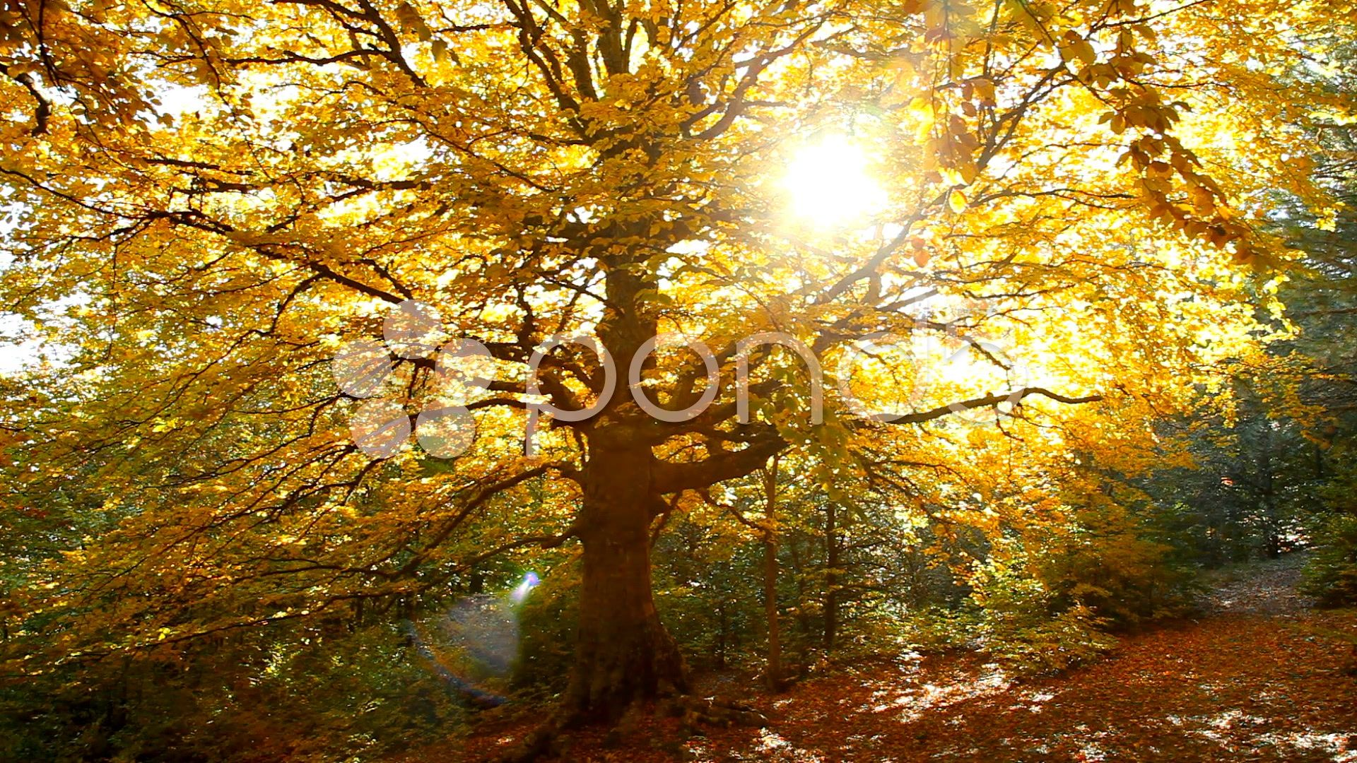 Autumn trees in the park - Stock Footage | by silverjohn