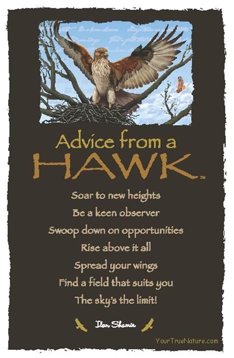 Advice From A Hawk By Ilan Shamir Witch Book Of Shadows