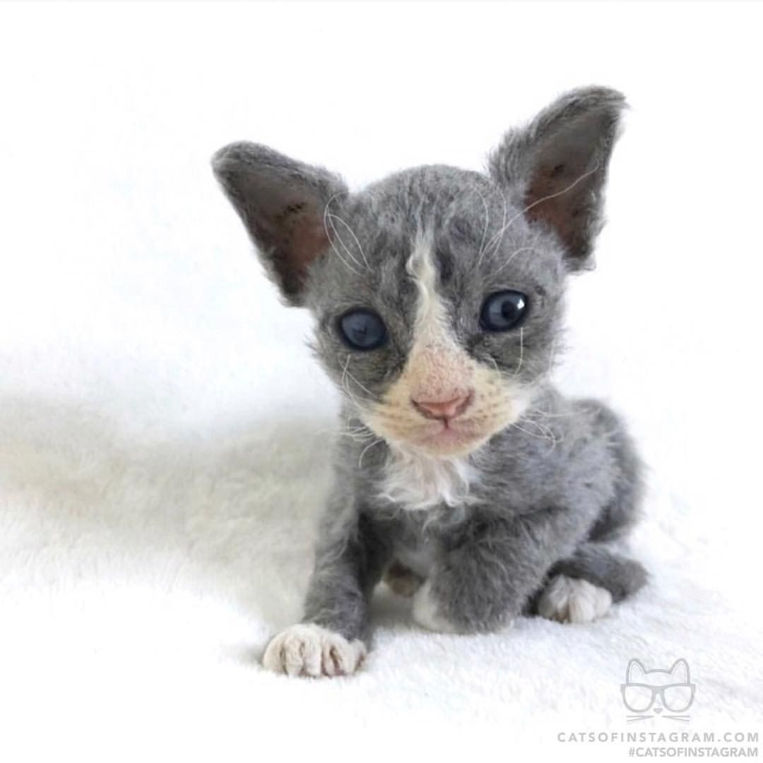 Pin by Jess on Flawless House Cats Kitten rescue, Felt