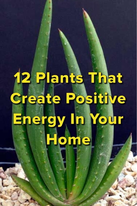12 home plants for positive vibes