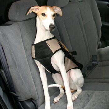 34 95 49 95 Silver Dog Safety Harness Medium Snoozer Dog