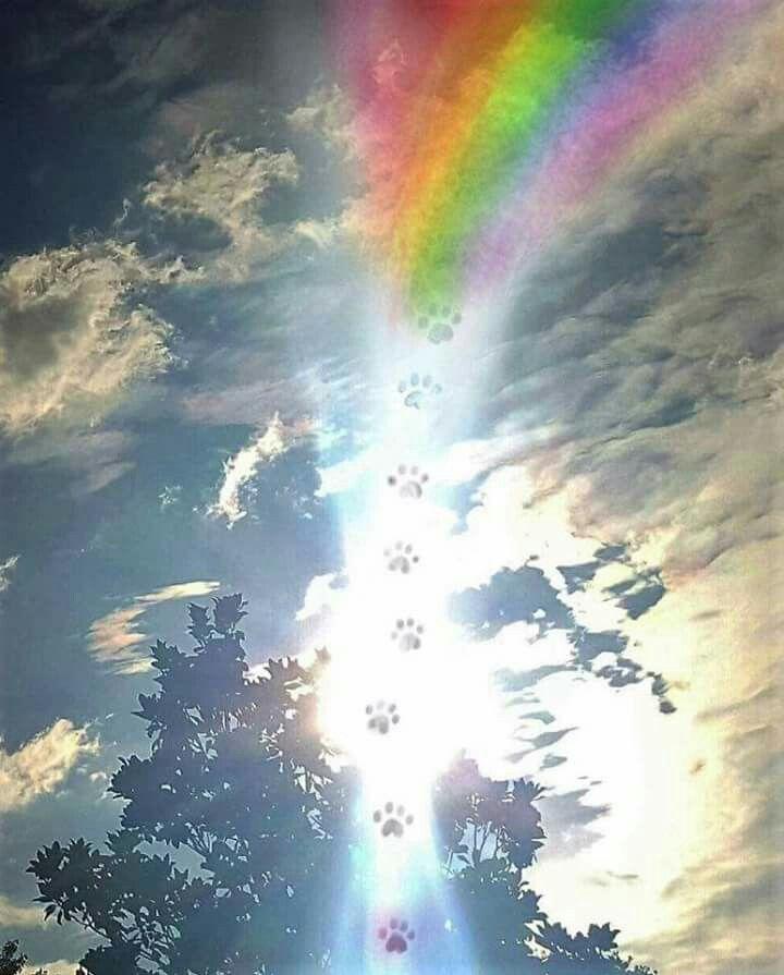 Pawprints To Rainbow Bridge Rainbow Bridge Pet