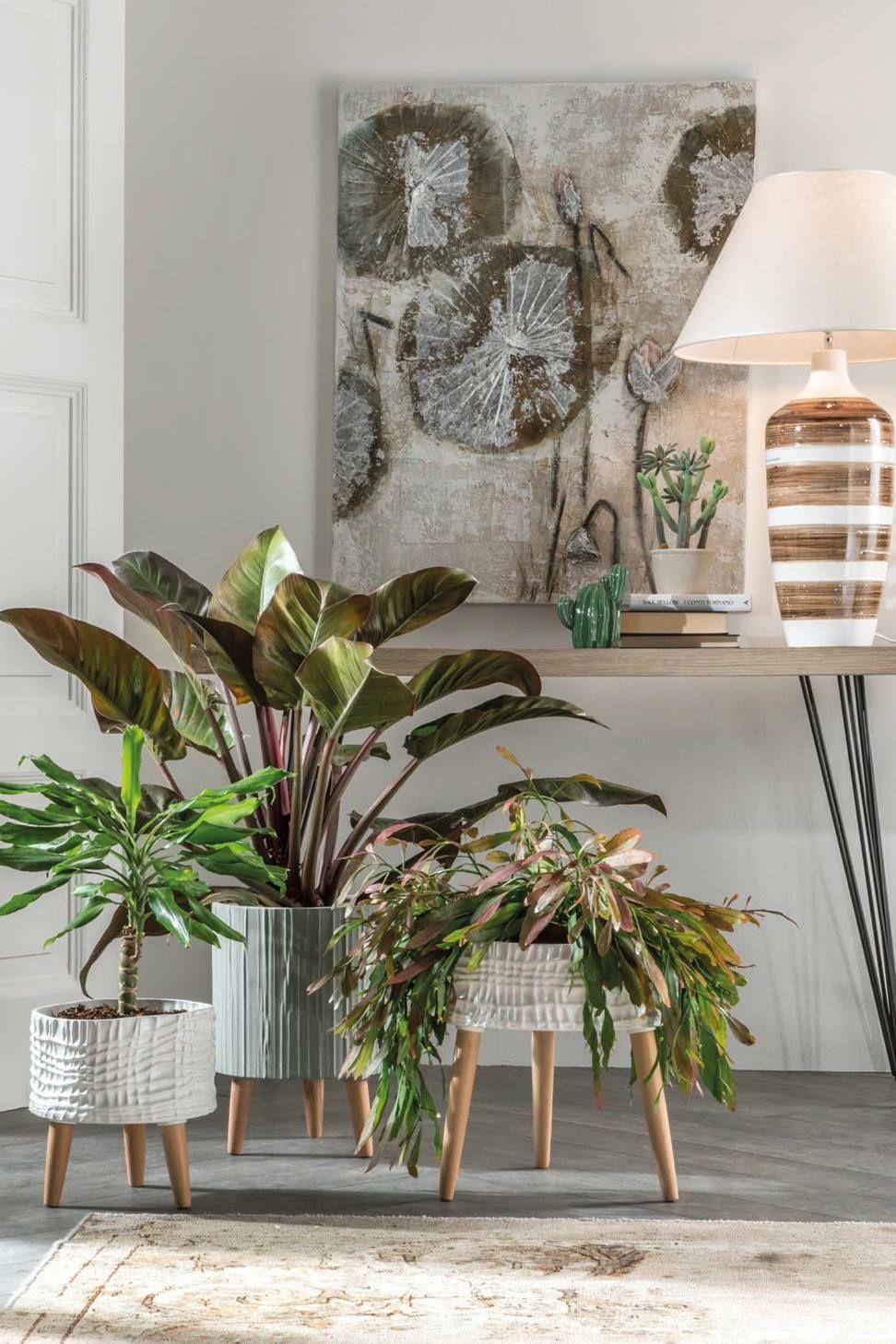 L'Oca Nera 5 idee per arredare casa con le piante da