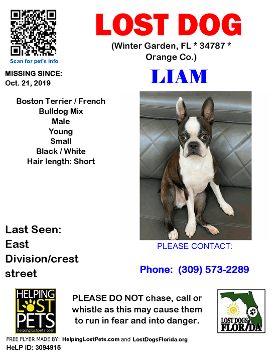 Liam Is Lost Have You Seen Him Do Not Chase Lostdog Liam Wintergarden East Division Crest Street Fl 34787 Orange Co Dog 10 21 2019 Male Bostont