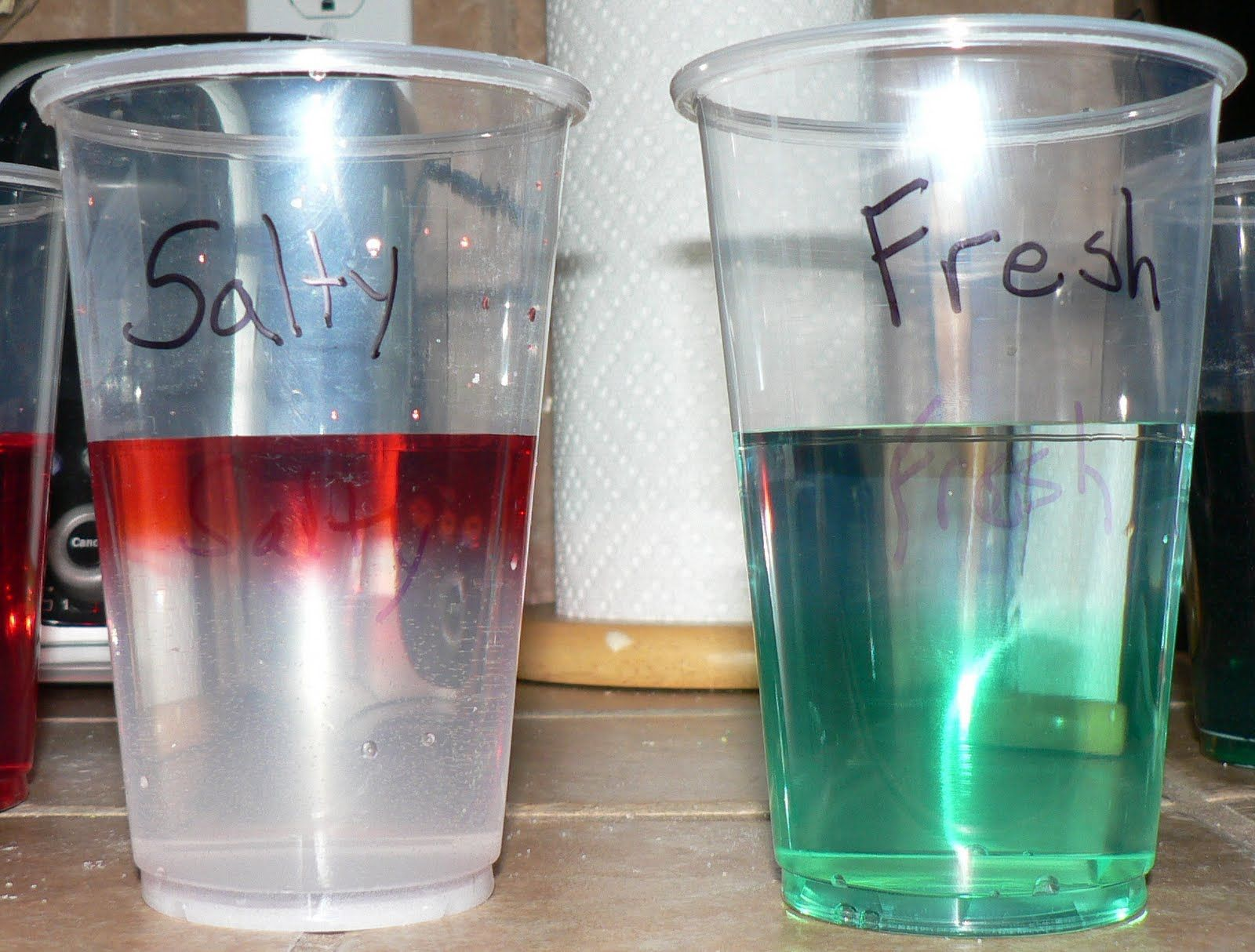 Salt And Freshwater Experiment