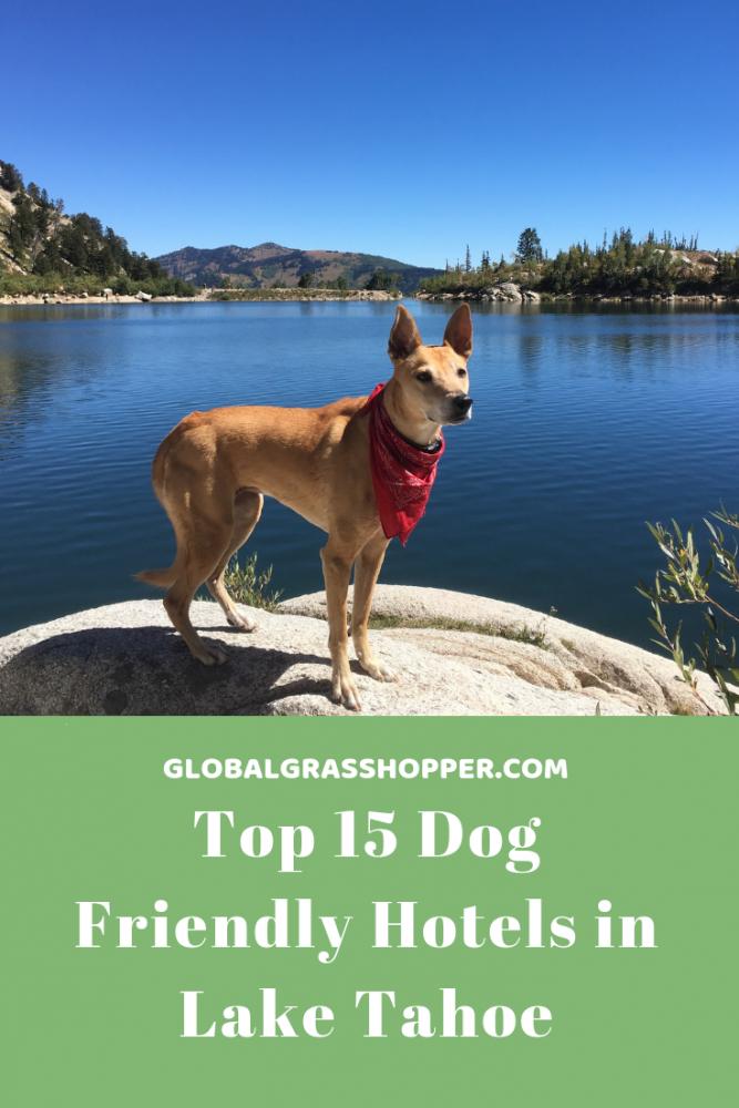 Top 15 Dog Friendly Hotels Lake Tahoe Global Grasshopper Dog Friendly Trails Dog Friendly Hotels Hiking Trip