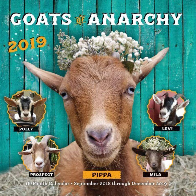 2019 calendar goats 16 month calendar baby goats