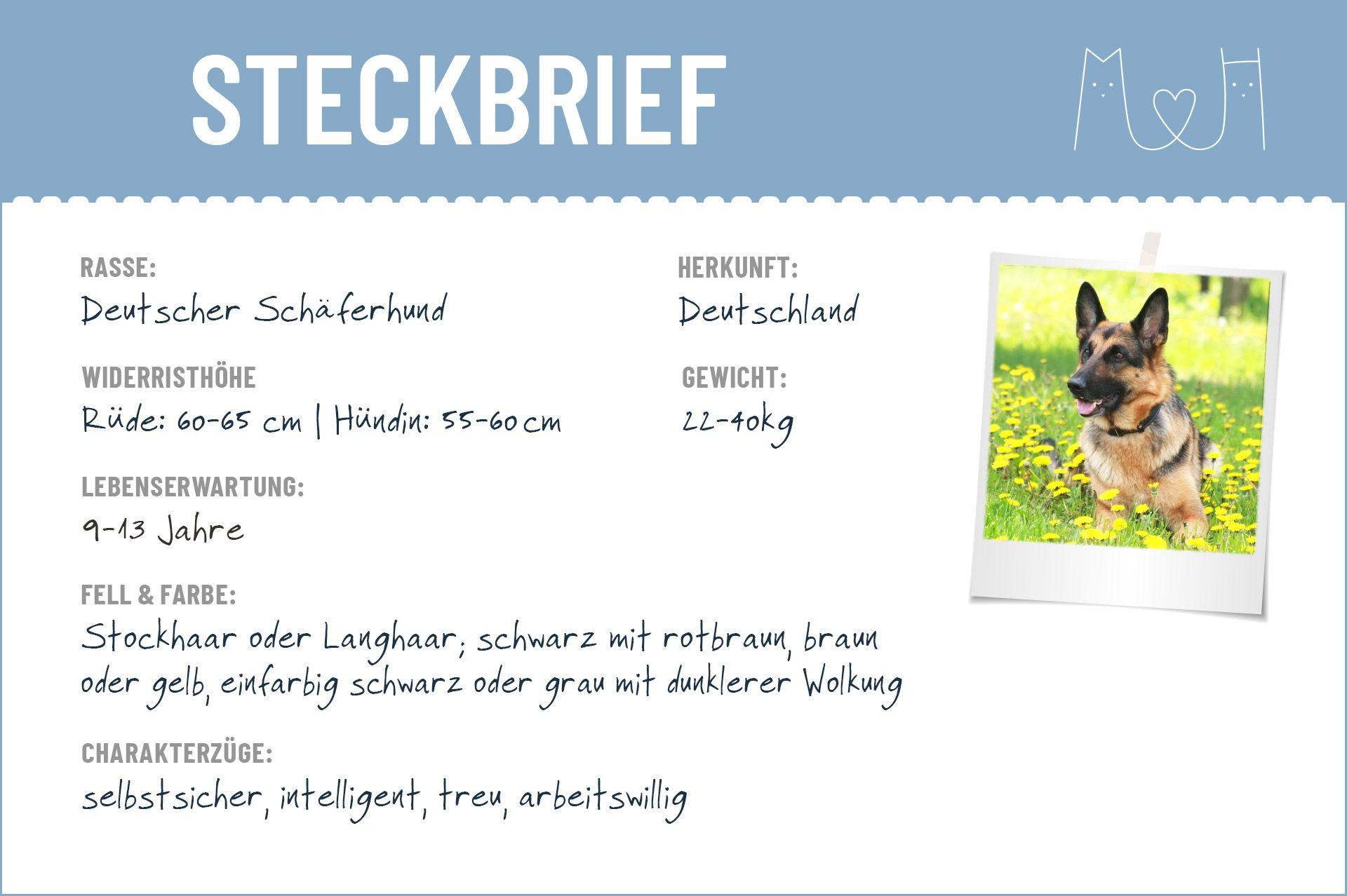 Deutscher Schaferhund Steckbrief Charakter Wesen Haltung Schaferhunde Hunde Deutscher Schaferhund