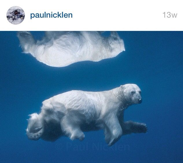 A reflection by Paul Nicklen
