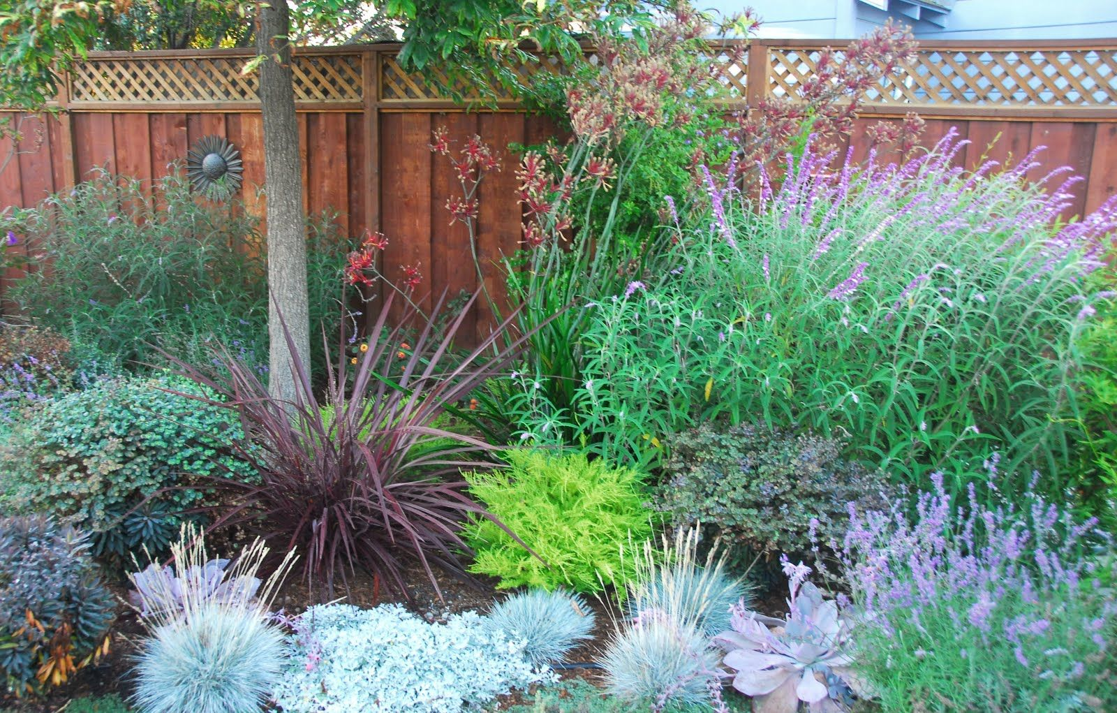 Lilac Lawns Or Why Water Wise Rocks Small Yard Landscaping