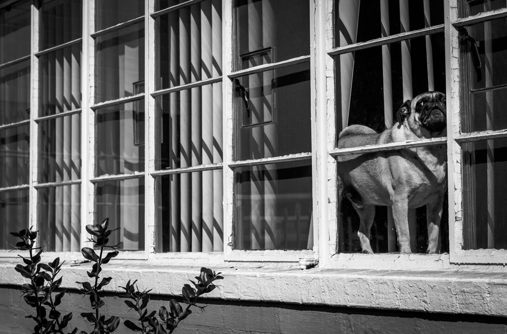 Patrick Huffine, Pug Life, 2015