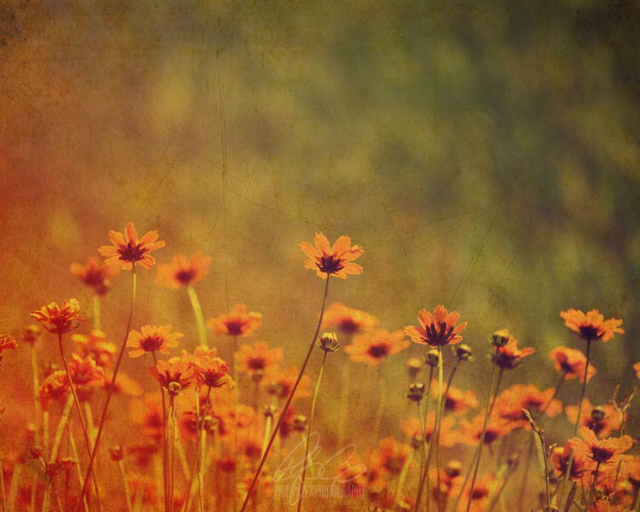 Vintage Yellow Flowers - Philip Alex Photography