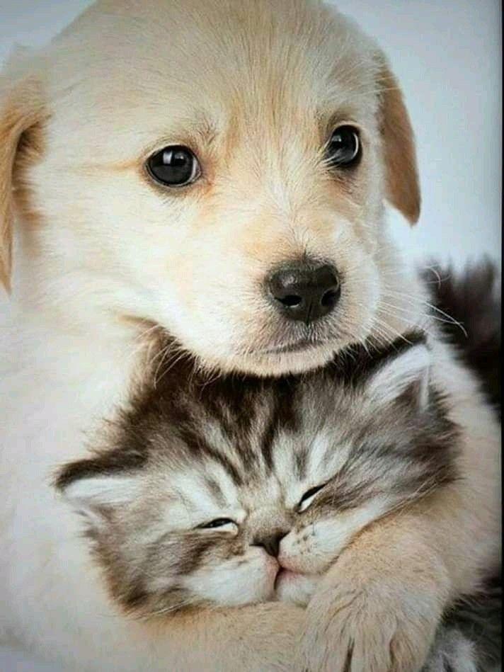 Pin By Zlatka Moljk On Cute Cute Animals Cute Cats Dogs Cute