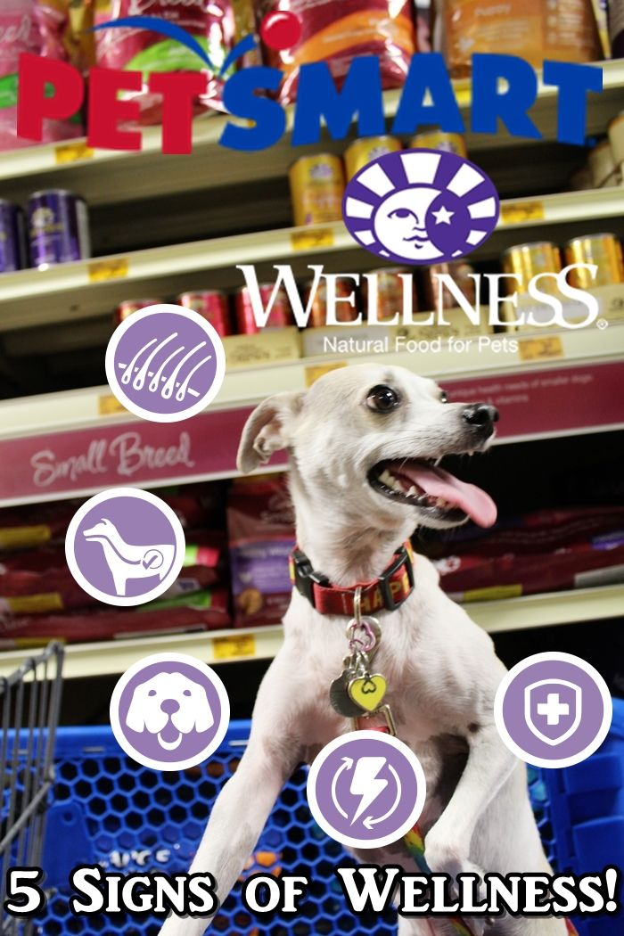 Finding 5 Signs Of Wellness At Petsmart Wellnesspet Dog Food