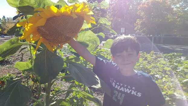 Hey GMa look at this giant sunflower!