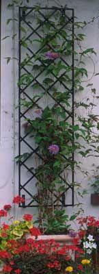 grata per piante rampicanti - Cerca con Google
