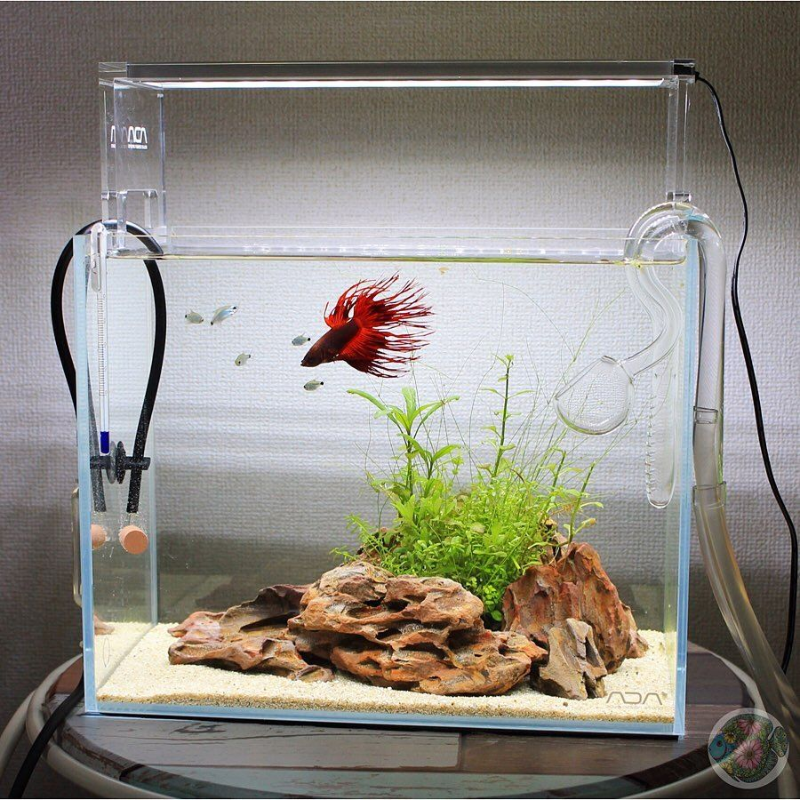 Mini Simply Betta Tank Layout Betta Fish Fish Aquarium Decorations Fish Tank