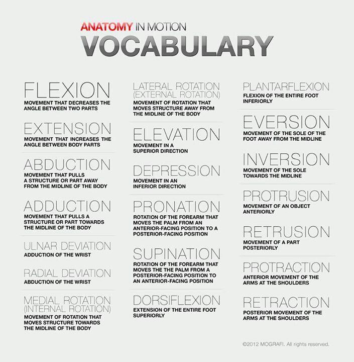 Anatomy movement terms | Nursing | Pinterest | Anatomy, Medical and ...