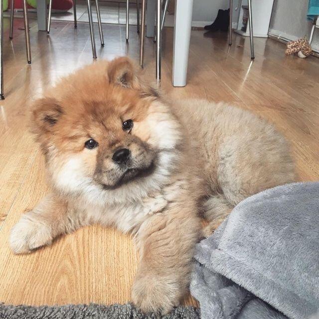 Photo of 𝐈 𝐈 𝐖𝐀𝐍𝐓 𝐀 𝐒𝐎 𝐁𝐀𝐃𝐋𝐘 lindo | Cachorro …..
