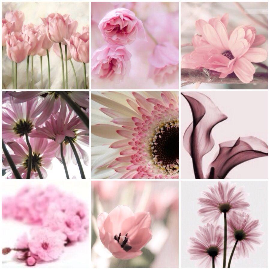 Картинки коллажи с цветами