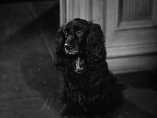 The spaniel in Hitchcock's