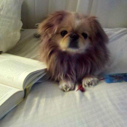 get a lion dog Liss!!!! @Melissa Dellar