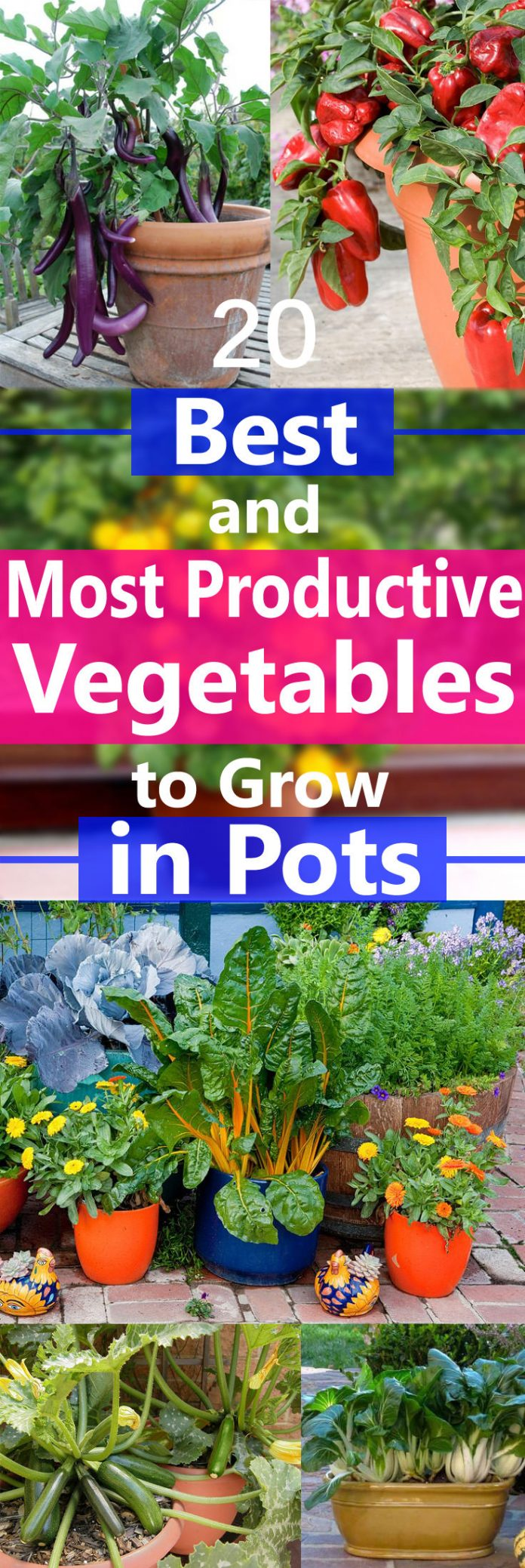 Best Most Productive Vegetables To Grow In Pots Home 400 x 300
