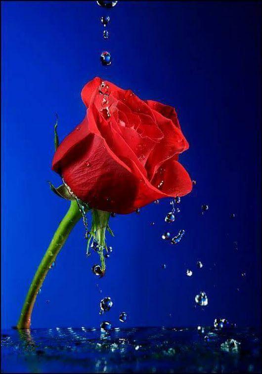 Mensagens e gifs românticas: For you...