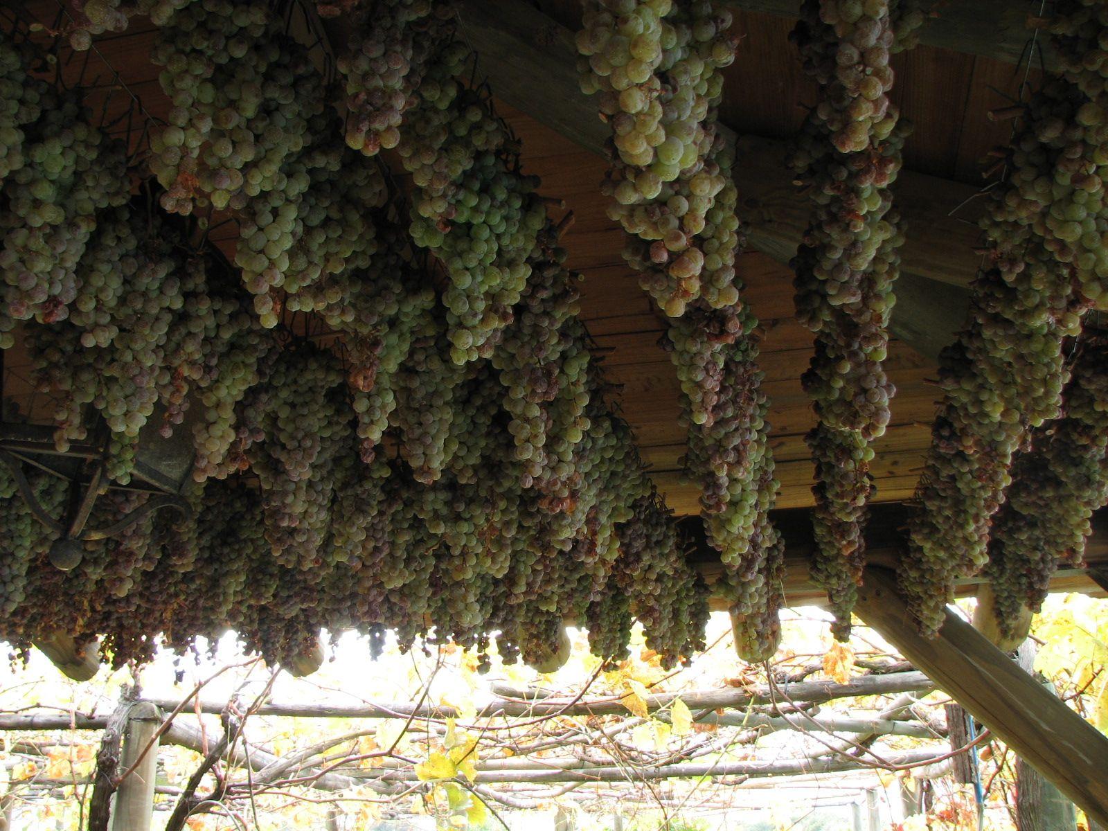 Erasmo Wine
