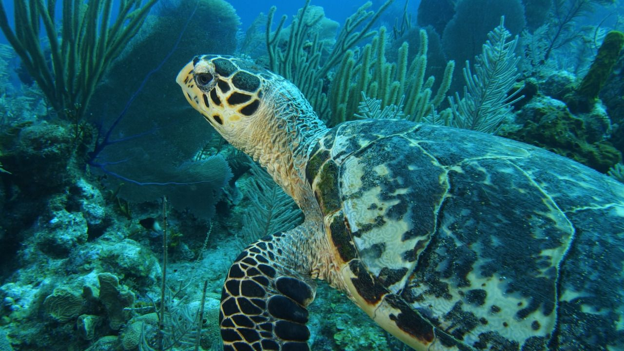 Ms. Marine Bio           - Because everyone loves sea turtles. Majestic...