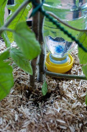 Epingle Sur Jardin Et Plante