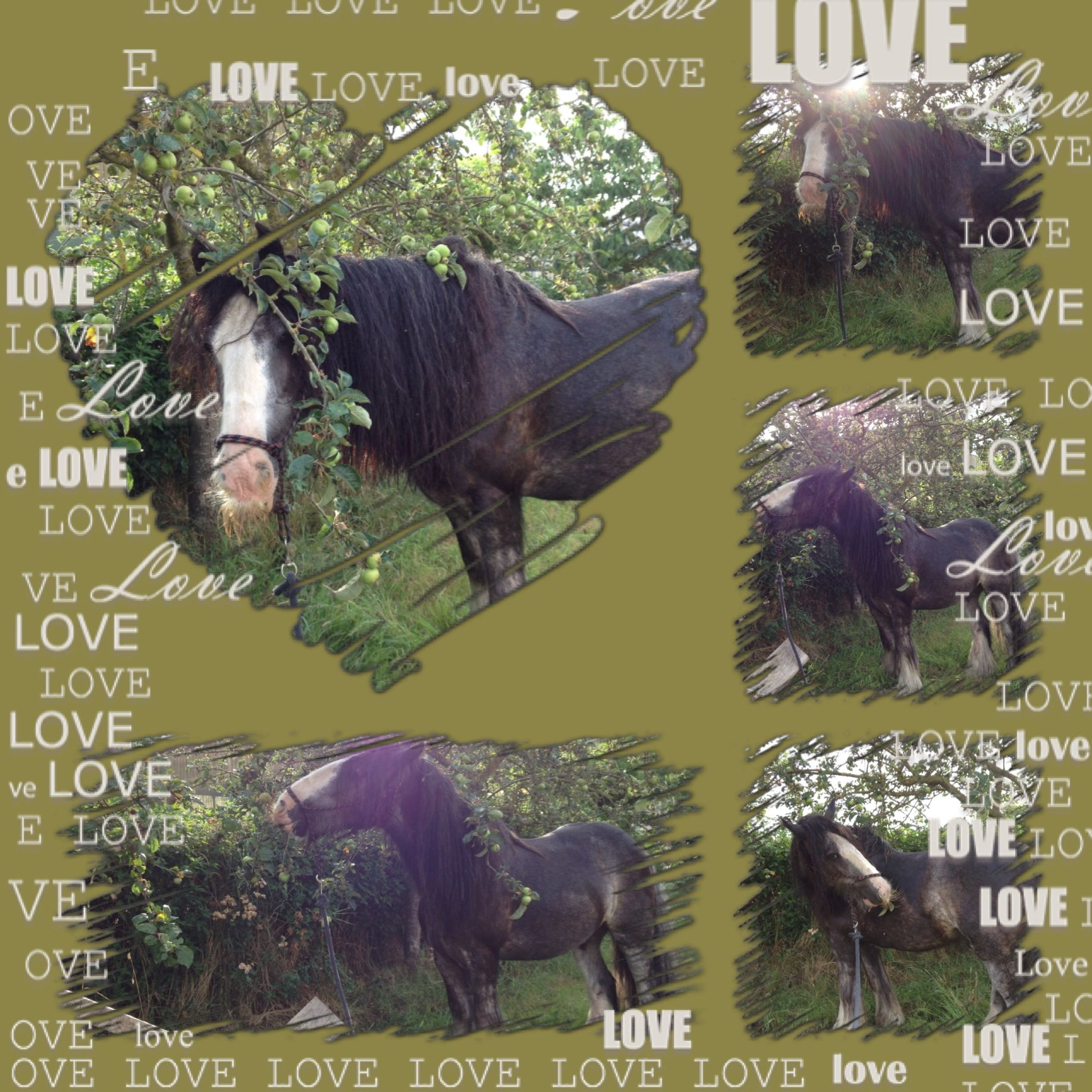 Pin By Lucinda Patmore On Love Me Some Horses Horses Irish Cob Irish