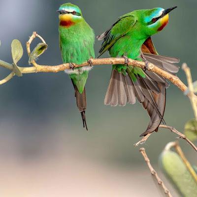 خلفيات طيور رائعة In 2021 Animals Bird Parrot