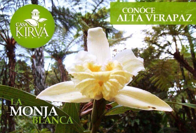 Monja Blanca www.casakirva.com
